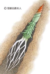 nerosa-larva